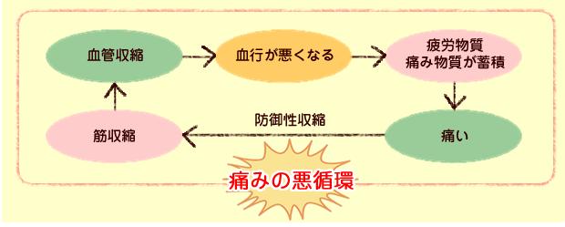血管収縮→血行が悪くなる→疲労物質、痛み物質が蓄積→痛い筋収縮(痛みの悪循環)